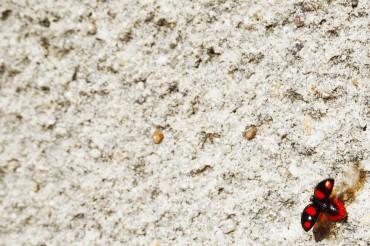 ladybug_1_bis