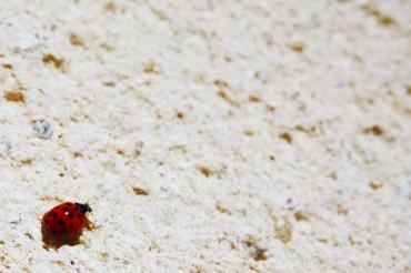 ladybug_2_bis