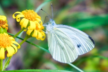 butterfly snacking on yellow flower
